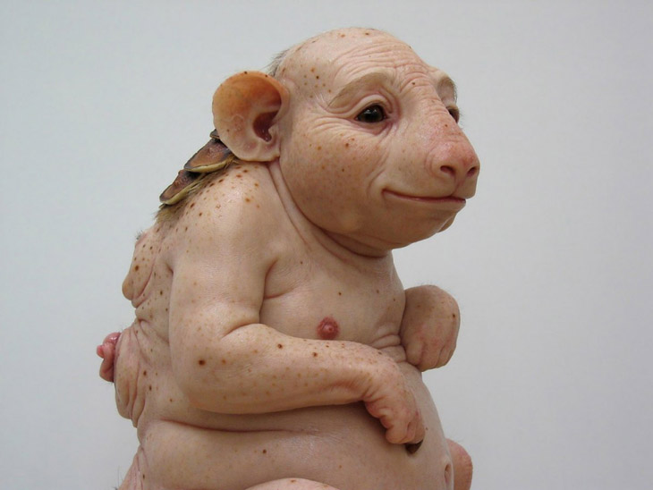 20808_patricia_piccinini_northern_hairynosed_wombat