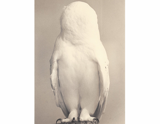 Masao Yamamoto - Kawa=Flow 1637 - gelatina e prata e tecnica mista