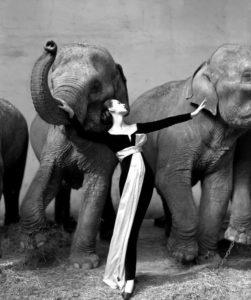 16-richard-avedon-dovima-with-elephants-christies