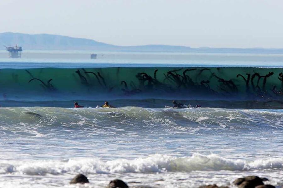 13-algas-na-onda-da-praia-causa-medo-1-900x600
