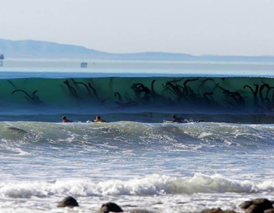 estes-tentaculos-semelhantes-aos-dos-monstros-marinhos-sao-apenas-parte-de-uma-alga-gigante-dentro-da-onda