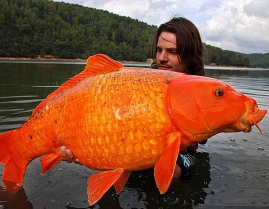 nao-e-photoshop-e-somente-uma-carpa-gigante