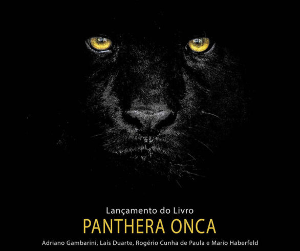 panthere-onca