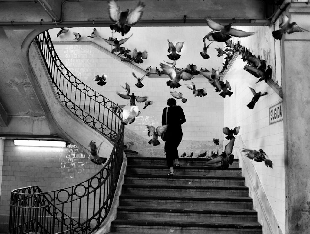 Pássaros numa escadaria