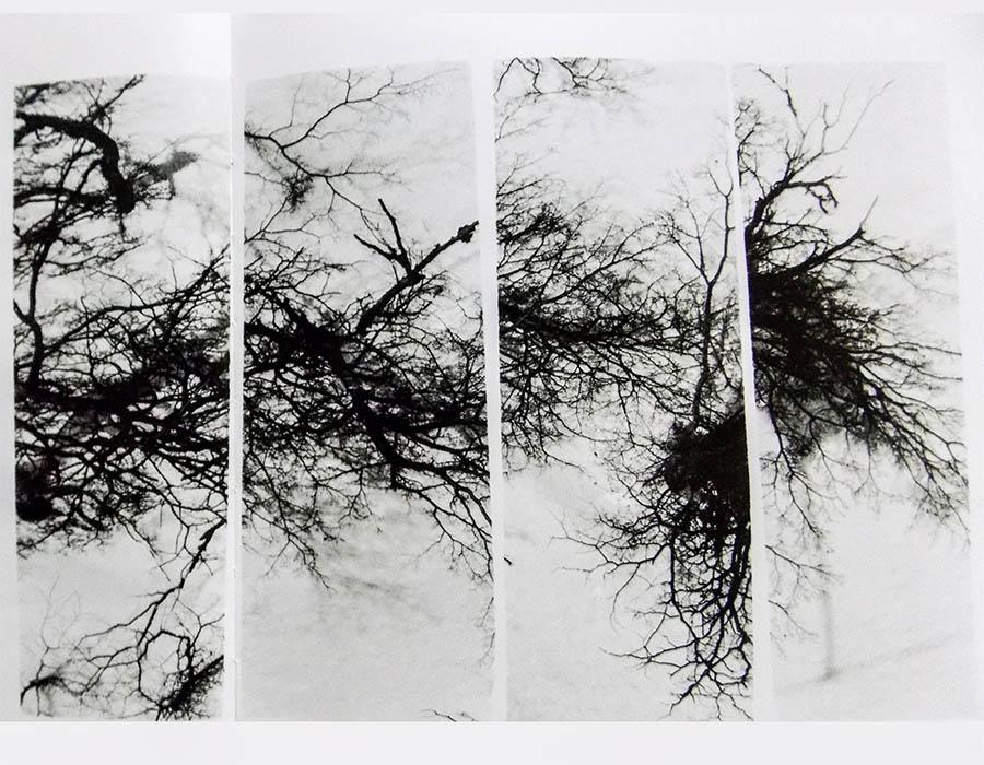 Conheça as fotoformas e sobras de Geraldo de Barros
