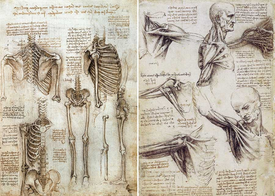 Estudos de anatomia de Leonardo da Vinci