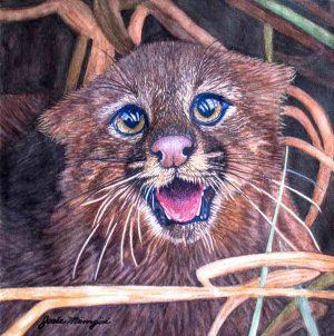 Gato Palheiro - Josie Mengai
