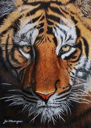 tigre-de-bengala - Josie Mengai