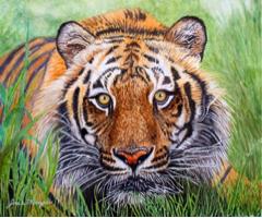 tigre da indochina - Josie Mengai